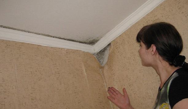 Як вивести грибок на стелі і стінах?