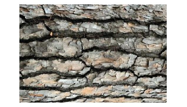 Німецькі вчені розробили ізоляційну піну з кори дерева - це і є іноваційна технологія